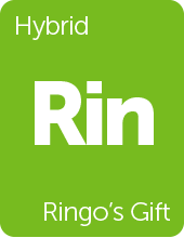 Leafly Ringo's Gift cannabis strain tile