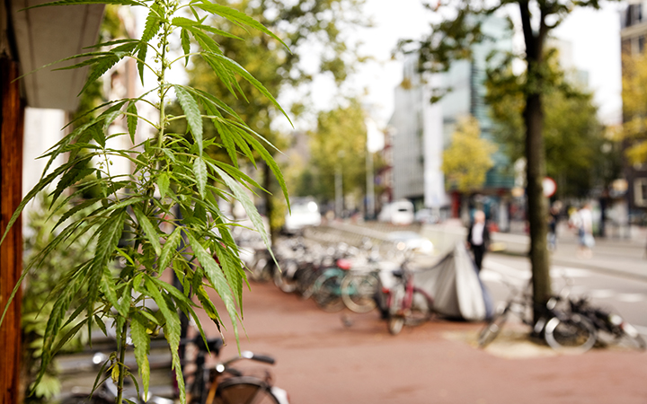 5 Myths About Cannabis and Coffeeshops in the Netherlands: 5. Consuming in Public is No Problem