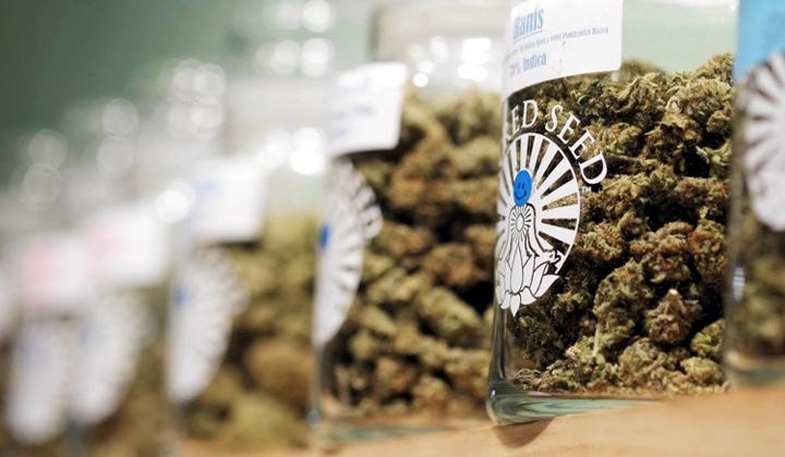 Sacred Seed's cannabis strains