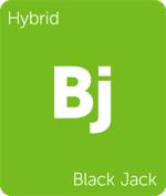 Leafly hybrid Black Jack cannabis strain tile