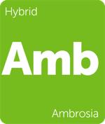 Leafly hybrid Ambrosia cannabis strain tile