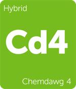Leafly hybrid Chemdawg 4 cannabis strain tile