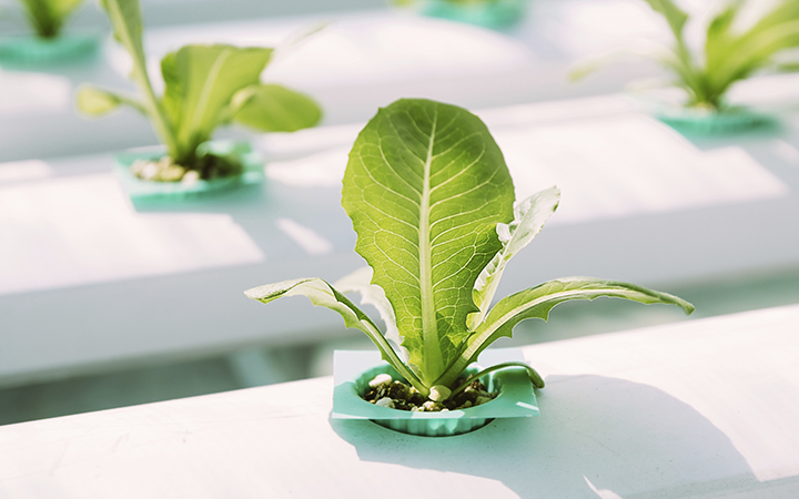 Hydroponic grow system for plants