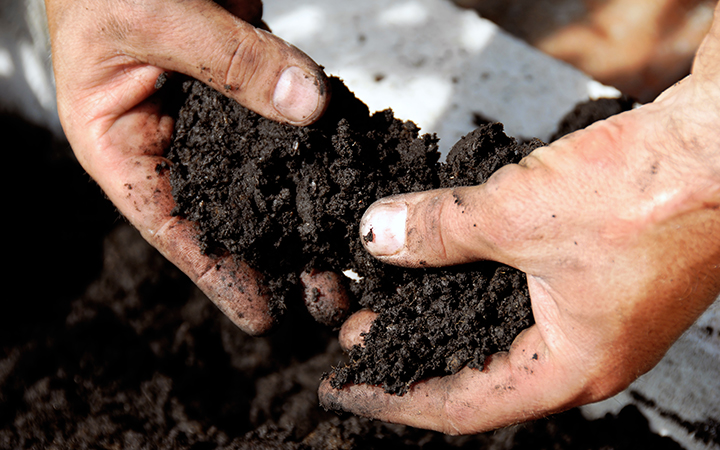 Soil for plants