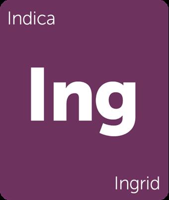 Leafly Ingrid cannabis strain tile