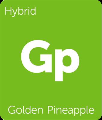 Leafly Golden Pineapple cannabis strain tile