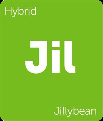 Leafly Jillybean cannabis strain tile