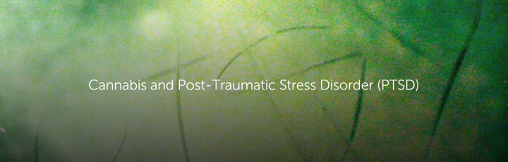 Cannabis and Post-Traumatic Stress Disorder (PTSD)