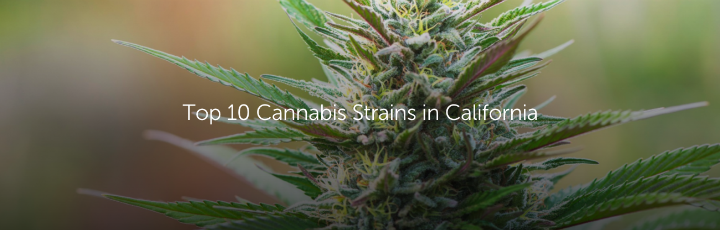 Top 10 Cannabis Strains in California