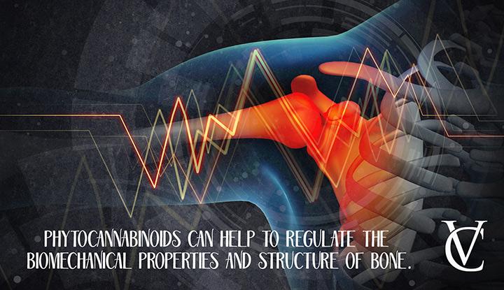 How do phytocannabinoids impact bone structure?