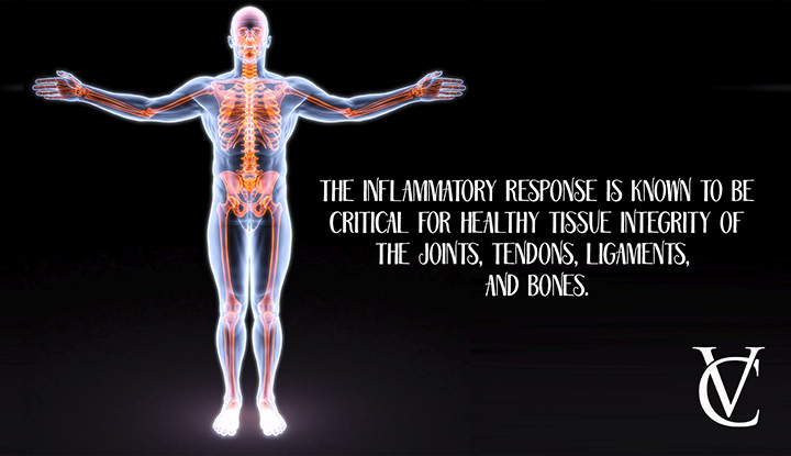 Why is your body's inflammatory response so crucial?