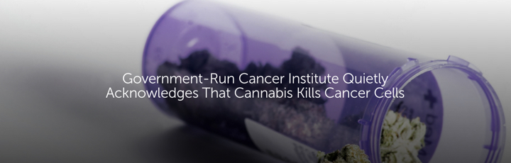 Government-Run Cancer Institute Quietly Acknowledges That Cannabis Kills Cancer Cells