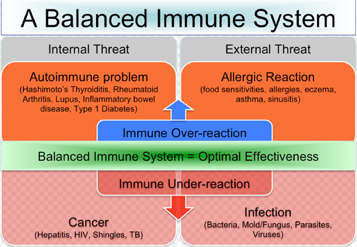 Chart showcasing how the immune system is balanced