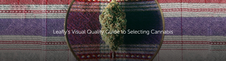 Leafly's Visual Quality Guide to Selecting Cannabis