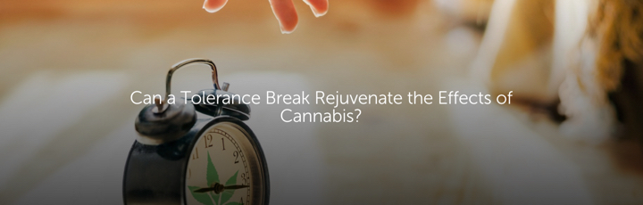 Can a Tolerance Break Rejuvenate the Effects of Cannabis?