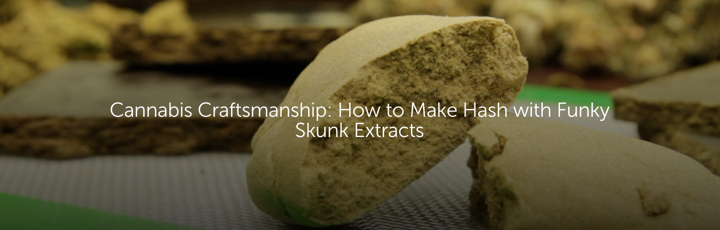 Cannabis Craftsmanship: How to Make Hash with Funky Skunk Extracts