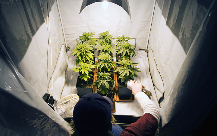 How To Grow Marijuana Indoors Leafly
