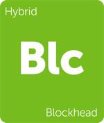 Leafly hybrid Blockhead cannabis strain tile