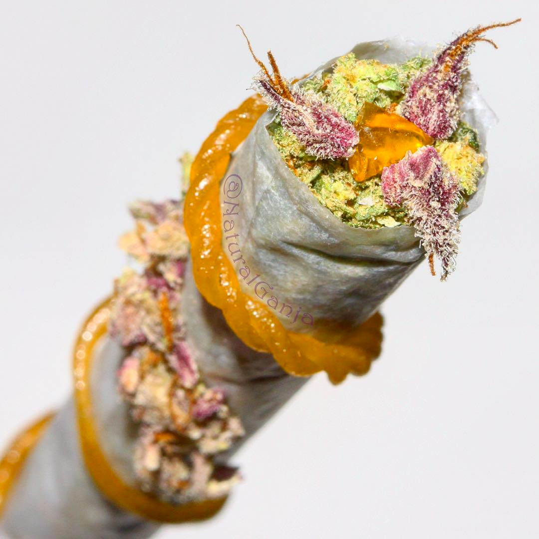 Cannabis joint with dried cannabis exposed at the tip and cannabis oil wrapped around the joint