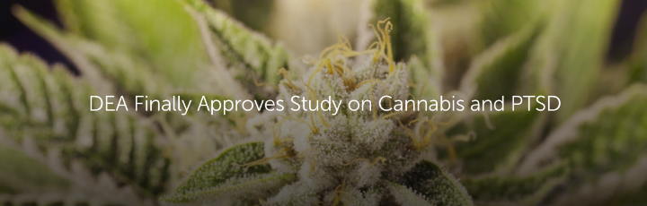 DEA Finally Approves Study on Cannabis and PTSD