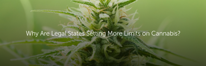 Why Are Legal States Setting More Limits on Cannabis?