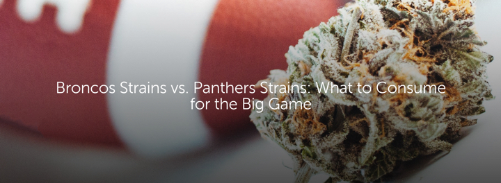 Broncos Strains vs. Panthers Strains: What to Consume for the Big Game