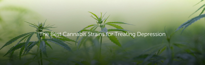 The Best Cannabis Strains for Treating Depression