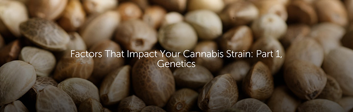 Factors That Impact Your Cannabis Strain: Part 1, Genetics