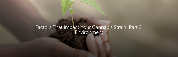 Factors That Impact Your Cannabis Strain: Part 2, Environment