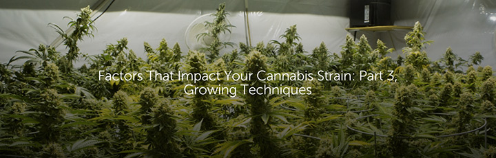 Factors That Impact Your Cannabis Strain: Part 3, Growing Techniques