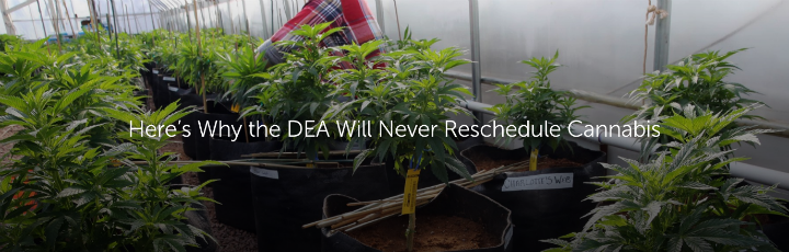 Here's Why the DEA Will Never Reschedule Cannabis