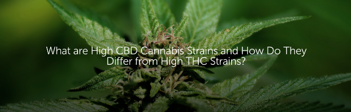 What are High CBD Cannabis Strains and How Do They Differ from High THC Strains?