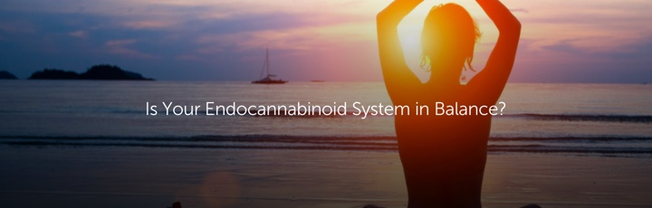 Is Your Endocannabinoid System in Balance?