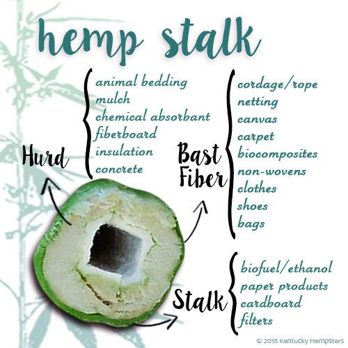 The hemp stalk and its uses