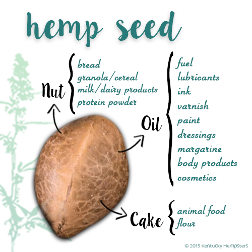 The hemp seed and its many uses