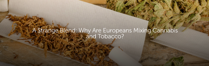 A Strange Blend: Why Are Europeans Mixing Cannabis and Tobacco?