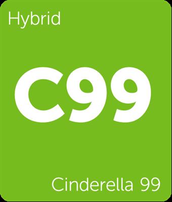 Leafly Cinderella 99 hybrid cannabis strain tile
