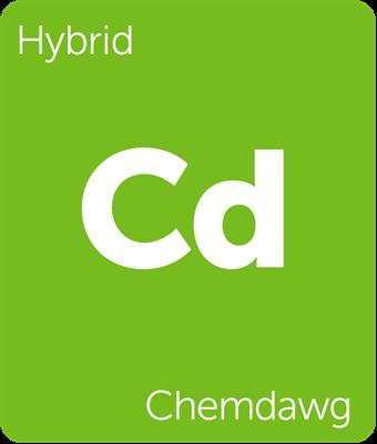 Leafly Chemdawg hybrid cannabis strain tile