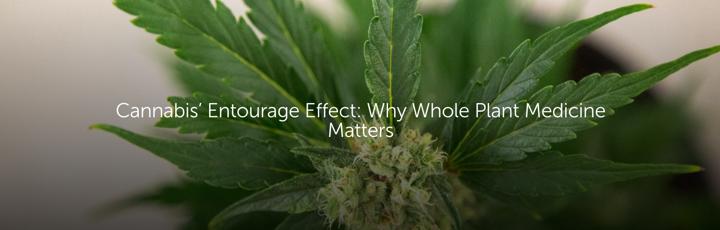 Cannabis' Entourage Effect: Why Whole Plant Medicine Matters