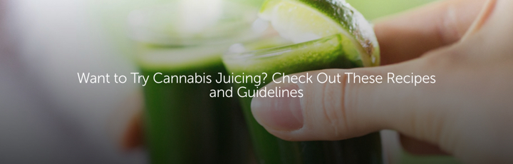 Want to Try Cannabis Juicing? Check Out These Recipes and Guidelines