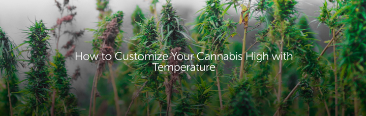 How to Customize Your Cannabis High with Temperature