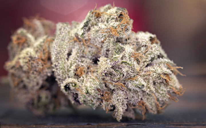 Trichome production: from grow to harvest and beyond