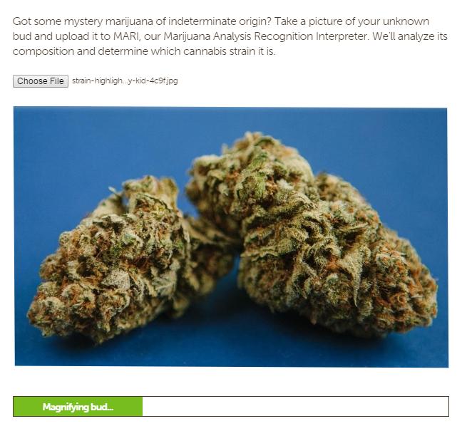 MARI cannabis identifier tool analyzing a marijuana bud