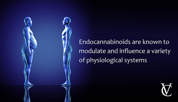 What does the endocannabinoid system influence?