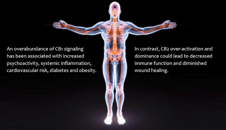 Imbalanced endocannabinoid system