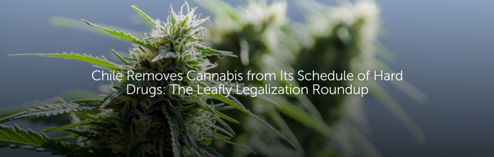 Chile Removes Cannabis from Its Schedule of Hard Drugs: The Leafly Legalization Roundup