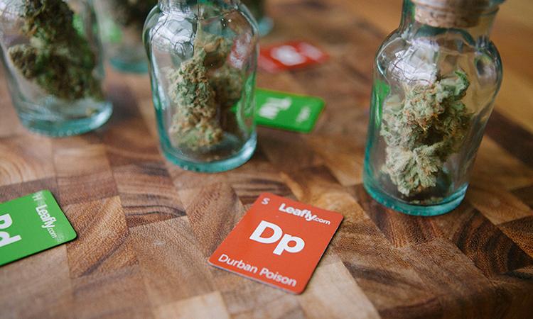 Jars of cannabis alongside Leafly strain tiles