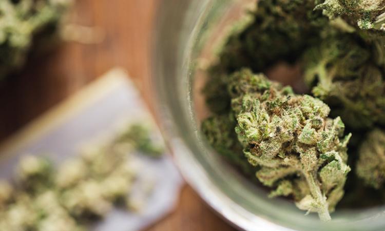 Jar full of cannabis buds