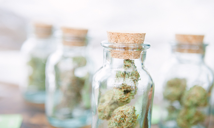 Dried cannabis flower in jars