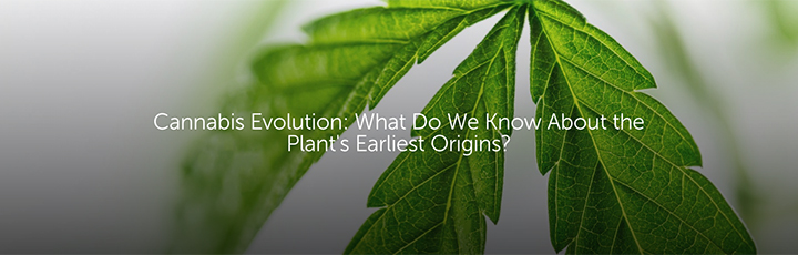 Cannabis Evolution: What Do We Know About the Plant's Earliest Origins?
